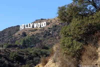 Der Hollywood Schriftzug