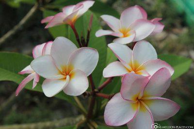 Blumen auf der Insel