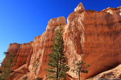 Der Navajo Loop