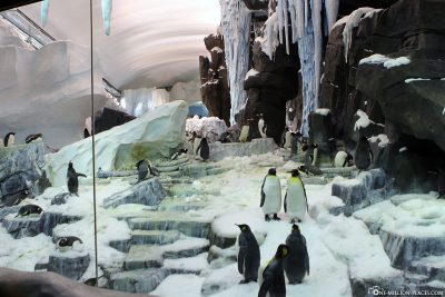 Antartica im Sea World Orlando
