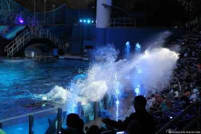 Tiershow in Sea World