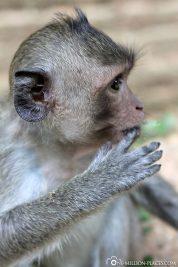 Monkeys on the roadside