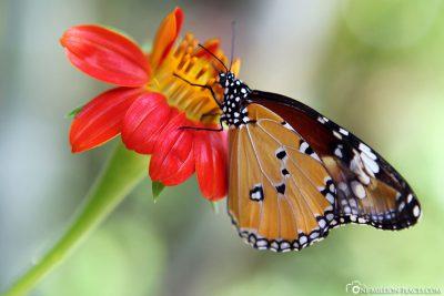 Banteay Srey Butterfly Centre