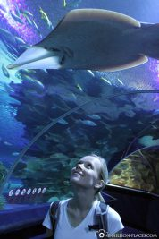 The aquarium in Kuala Lumpur