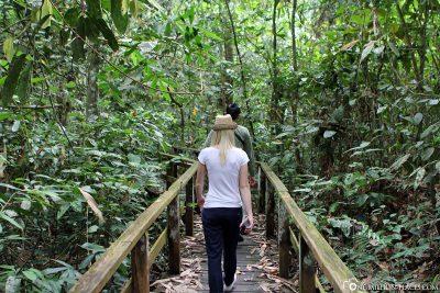 Hike through the jungle of Borneo