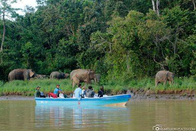 Wildlife watching on the Kinabatangan River