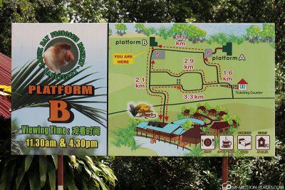 The Proboscis Monkey Labuk Bay Sanctuary