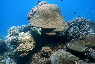 Die Unterwasserwelt am Apo Island