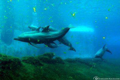 Das S.E.A. Aquarium