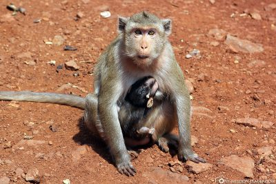 A monkey mother with her baby