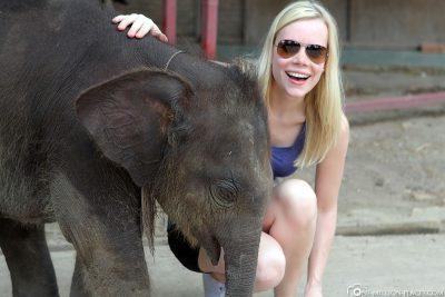 Ein Babyelefant im Elephantstay in Ayutthaya