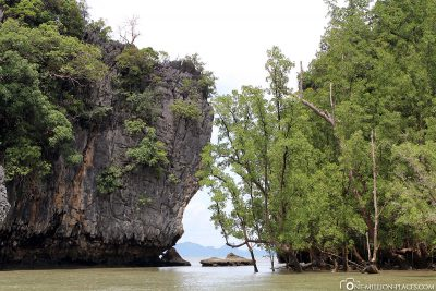 Overgrown rocks and small islands