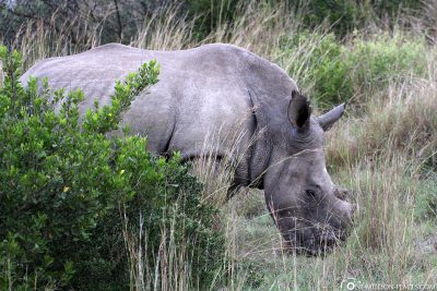 Rhinos at Gondwana Game Reserve