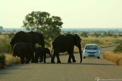 Game ride in Kruger National Park
