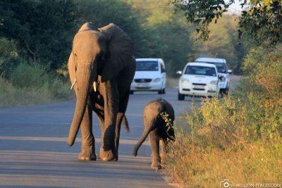 Ein Elefant mit Jungtier