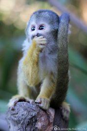 Die Affen im Park