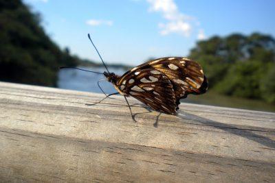 Iguaza National Park