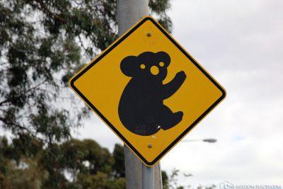 Koala Schild