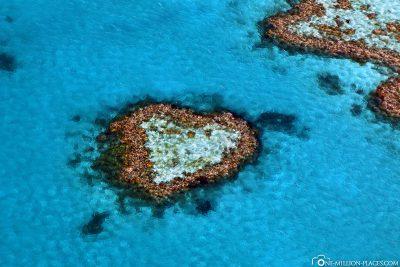 Das Heart Reef in Australien