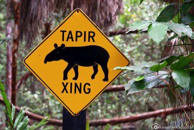 Der Encounter für Tapire