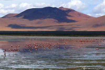 The Laguna Colorada