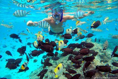 Das Aquarium in Bora Bora