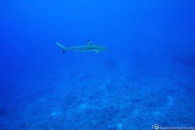 The dive spot Haapiti