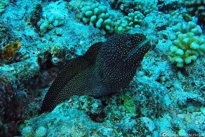 The diving spot Tapu