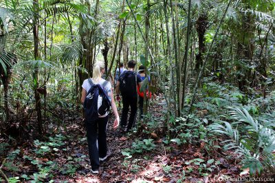 Hike through the Amazon Jungle