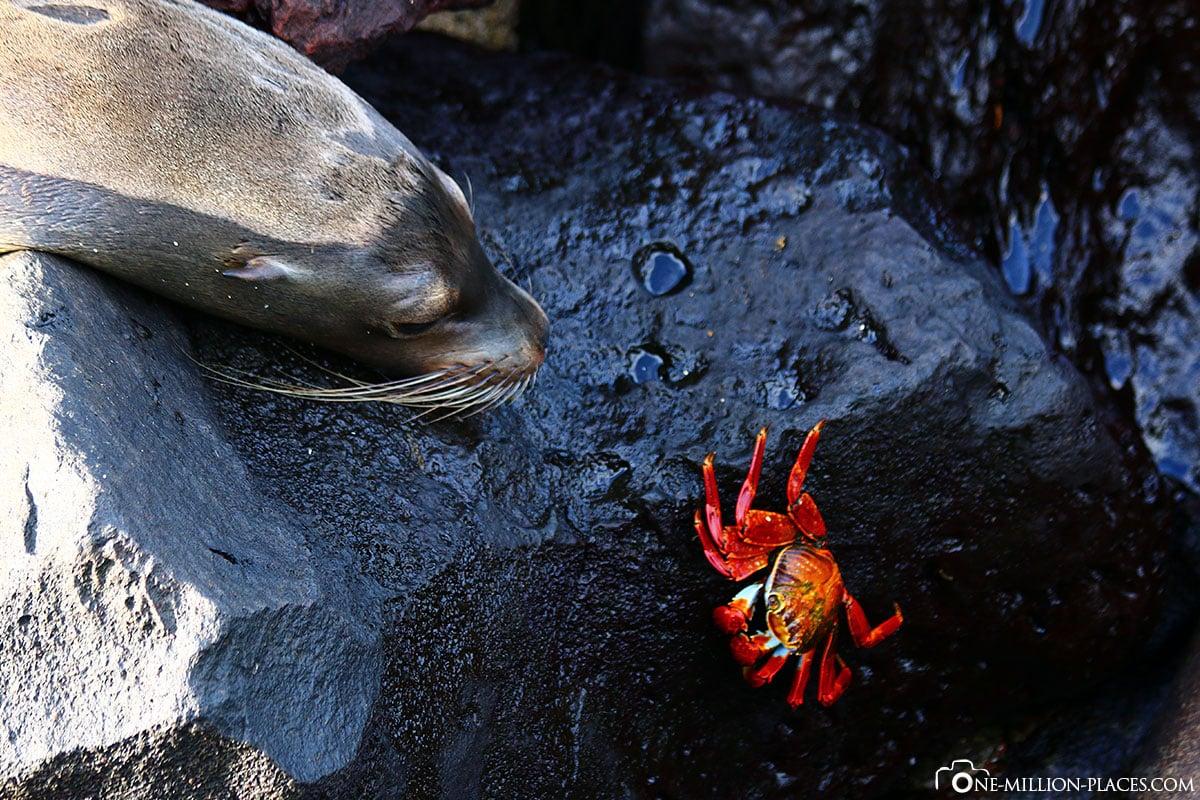 Insel San Cristobal, Galapagos, Ecuador, Rundreise, Tierwelt, Reisebericht