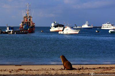 Strand in Puerto Baquerizo Moreno