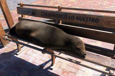 Seelöwen in Puerto Baquerizo Moreno
