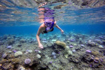 Snorkeling around the island