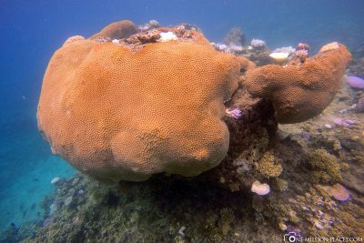 The underwater world of the island