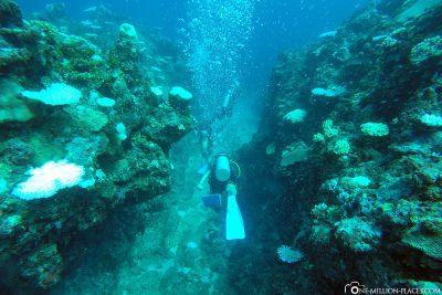The dive spot Crazy Maze