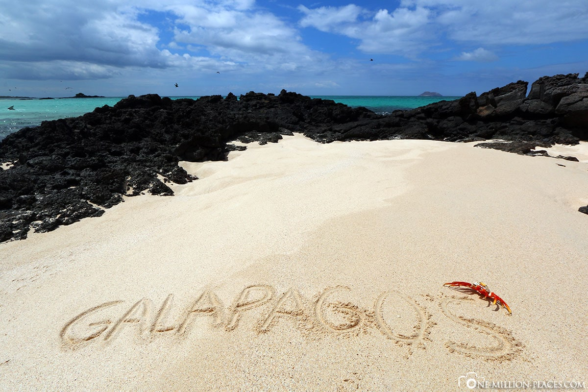 Beach, Bachas Beach, Santa Cruz Island, Galapagos, Ecuador, Wildlife, South America, Day Trip, Travel Report