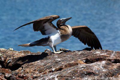 Die Tierwelt auf Galapagos