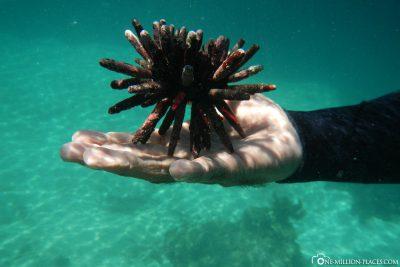 Unterwasserwelt von Los Tuneles