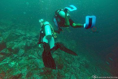 Diving in Galapagos
