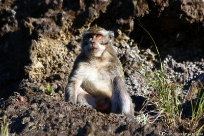 A monkey at the lookout point