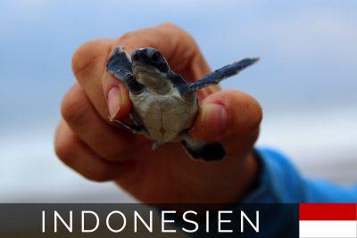 Sukamade Schildkröten Titelbild