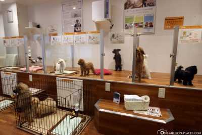 A shop with dog puppies