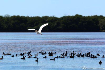 Die vielen Vögel in der Lagune