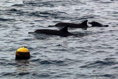 Delfine vor unserem Wasserbungalow