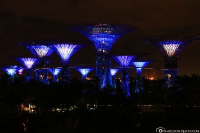The Super Trees in Gardens by the Bay