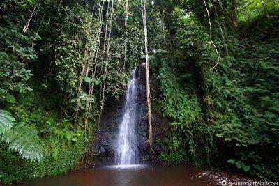 Wasserfall im Botanischen Garten