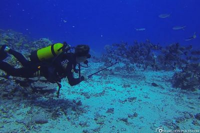 The White Valley dive spot