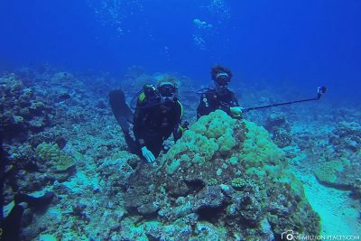 Placement behind a coral
