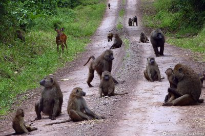 Our way is full of monkeys