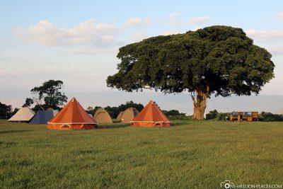Our built tents